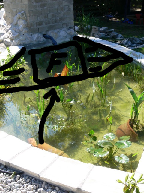 2011 4 Bauabschnitt Koi Und Schwimmteich Mit Pflanzenfilter